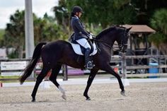 Como - Beautiful, high quality Hanoverian gelding schooling all GP movements and confirmed through PSG. Placed in US-Dressage Finals as a 5yo. Delightfully easy to ride, yet fancy thanks to the attractive mix of Contender/Pik Bube/Lauries Crusador xx/Weltmeyer bloodlines. Very AA friendly and totally uncomplicated. $185,000