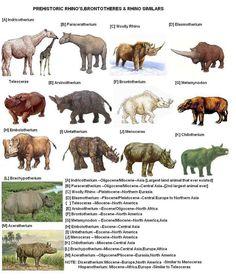 Prehistoric rhinocerotoids.