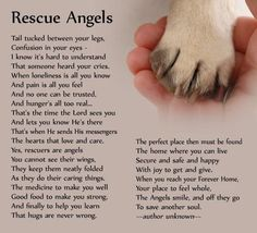 """I love """"Rescue Angels"""". Rescue angels come in all sizes and shapes. whether you rescue just one into your forever home or. I Love Dogs, Puppy Love, Tu Me Manques, Pug Puppies, Puppy Pitbulls, Pitbull Pups, Chihuahua Mix, Rainbow Bridge, Animal Quotes"""