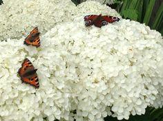Butterflies at rest :-)
