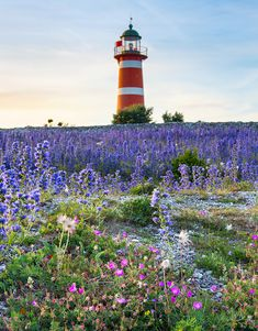 Gotland - När fyr och blommor detalj Beautiful Scenery Pictures, Beautiful Places, Sweden Travel, Vides, Summer Landscape, Travel Goals, Beautiful Islands, Beautiful Sunrise, Places To Visit