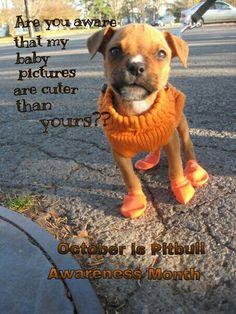 Baby pitbull Baby Pitbulls, Baby Animals, Cute Animals, Cutest Puppy Ever, Pit Bulls, Baby Pictures, Animals Beautiful, Puppy Love, Cute Puppies