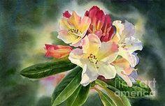 Sharon Freeman - Yellow Rhododendron Dark...