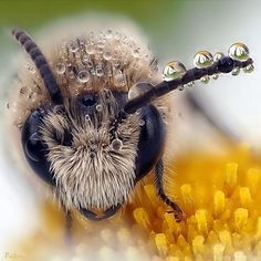 Adding Bee jewelry to your collection of accessories will undoubtedly bring happiness and cuteness wherever you go ! I Love Bees, Birds And The Bees, Amazing Animals, Animals Beautiful, Animals And Pets, Cute Animals, Foto Macro, Bees And Wasps, Bee Friendly