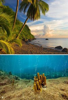 Champagne Beach & Reef - Roseau, Dominica Jamaica, Barbados, Santa Lucia, Places To Travel, Travel Destinations, Places To Visit, Belize, Central America, North America