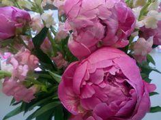 Pink Peonies & Snapdragons