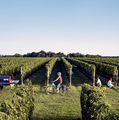 Lee Brothers' Guide to North Fork, Long Island: With its farm-fresh food and dynamic wines, Long Island's North Fork is quietly becoming one of the most exciting food destinations -- and it's just two hours from Manhattan.