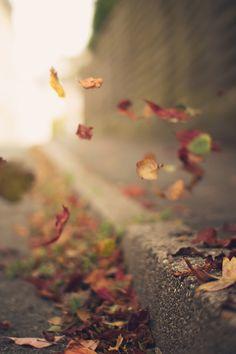 y siguen desprendiéndose las hojas