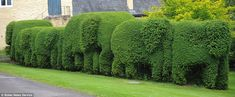 A homeowner concerned that his garden was becoming a jungle - has transformed it into a herd of elephants.    Green-fingered Gavin Hogg fell in love with the wildlife during a safari in Kenya.    So much so, that when he returned to Britain, he found an inspired way to recreate a little bit of Africa in his back garden.