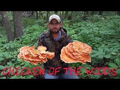 Foraging - Puffballs, Hen of the Woods, Chicken of the Woods, and Oyster…