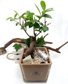 Wedding favors un bonsai come bomboniera wedding in for Mobilia wedding