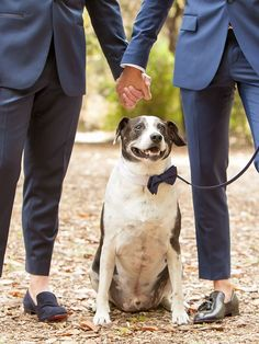 Hold hands alongside your pets for a cute wedding photography couple pose that includes the entire family! Dog Wedding, Wedding Poses, Wedding Photoshoot, Wedding Couples, Couple Picture Poses, Couple Posing, Wedding Couple Pictures, Vintage Wedding Photography, Couple Photography Poses