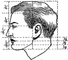 proportions of an ideal head in side view