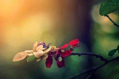 Explorer | Flickr - Photo Sharing!