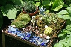 Create a fairy or gnome garden. Plant ideas, inspiration, sources, and photos.