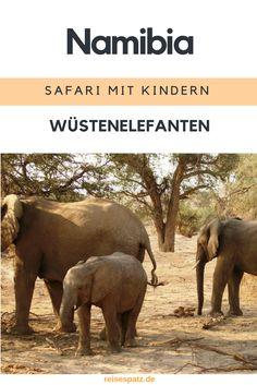 Eine Safari in Namibia zu den seltenen Wüstenelefanten ist ein ganz besonderes Erlebnis!