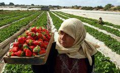 #LC || Palestin Bumi Yang Subur