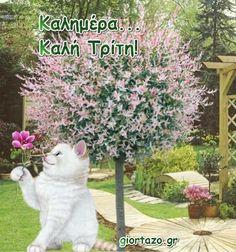 Καλημέρα για την κάθε μέρα γατούλα δέντρο Plants, Plant, Planets