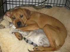 19 Reasons Why Dog Cuddles Are the Best Cuddles