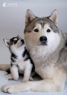 animaux chiens