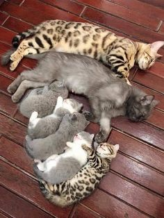 Animals Images, Animal Pictures, Cute Pictures, Funny Animals, Wild Animals, Funny Cats, All About Animals, Cute Little Animals, Adorable Animals