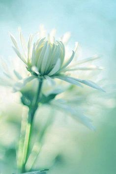 Think Love, breathe Love, offer Love Beautiful Images, Beautiful Flowers, Douglas Adams, Dear God, God Is Good, Bokeh, Gods Love, Mint Green, Just In Case