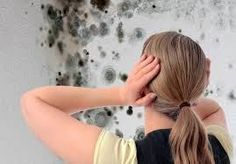 Buying a home with Mold Damage