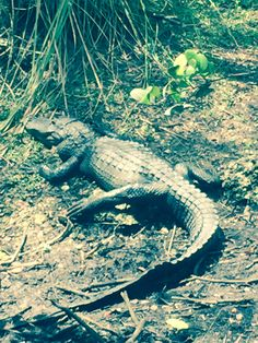 Loop Road-Everglades