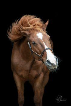 Pferdefotografie - Du möchtest ein Fotoshooting mit deinem Pferd? Alle Infos zum Pferdeshooting findest du auf meiner Homepage www.michaela-steiner.at Salzburg, Michaela, Horses, Photography, Animals, Bayern, Black Backgrounds, Photoshoot, Photograph
