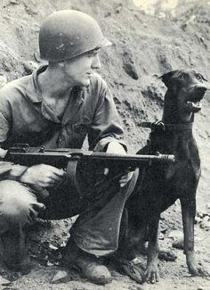 "WWII photo - Dobies were war dogs! ""Andy"", a Marine Corps devil dog,  saved a Marine Corps tank platoon from annihilation on Bougainville."
