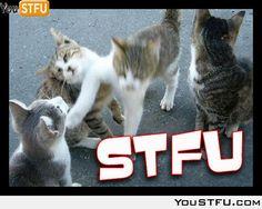 Kitty STFU