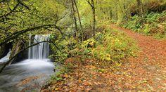 Más que uno sólo, es toda una exposición de diferentes tipos de bosque. El Parque Natural de Redes tiene además de hayedos, alcornocales, robledales o eucalipto. Pero es el haya el más abundante de la zona. Destaca por contar con una amplia riqueza medioambiental, ya que existen formaciones de origen glaciar y numerosas cuevas. Tal vez por ello sea uno de los lugares preferidos de osos pardo y lobos, que eligen esta zona de Asturias para tener a sus crías. También fue el lugar escogido por…
