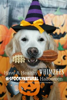 This Halloween have a WHIMZEES SpookyNatural, exclusively available at Petco