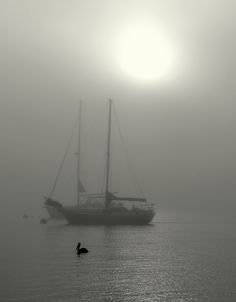 Misty morning, San Diego, CA Copyright: Eleu Tabares