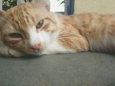 #Cat #Animals #PR #PuertoRico #Photography #BYJQG Puerto Rico, Cats, Photography, Animals, Gatos, Fotografia, Animais, Fotografie, Animales