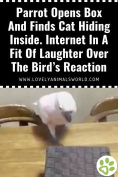 Parrot Opens Box And Finds Cat Hiding Inside. Internet In A Fit Of Laughter Over The Bird's Reaction - Lovely Animals World Animal Articles, Cat And Dog Videos, Interesting Animals, Funny Dogs, Make Me Smile, Parrot, Laughter, Dog Cat, Cute Animals