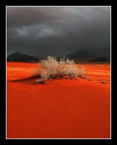 Jordan...this is what I imagine the burning bush to look like!