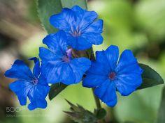 Study in blue ... - Olympus Digital Camera