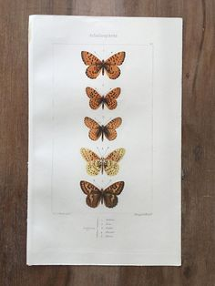 Antique hand colored Engraving with insects - butterfly.  Printed in 1864 year in Paris.  These are Original Antique prints, not a reproduction or copy.  The antique Engrav... #antiqueprint #originalprint #antiquewallart #walldecor #beautifulprints #vintageprint #lepidoptera