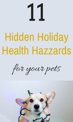 planning and festivities go full tilt take a moment to assess any hidden health hazards your home or guests may present to your pets. Pet Health, Four Legged, Natural Healing, Tilt, Pet Care, Helpful Hints, Your Pet, Take That, In This Moment
