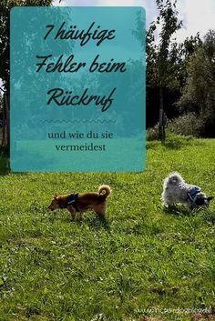 In diesem Artikel erfährst du, welche Fehler du beim Rückruf deines Hunde machen kannst und wie du diese vermeidest. #Hund #Hundetraining #Rückruf