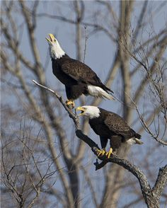 Happy Married Life - Eagle Style. via @Ohio's Lake Erie Shores & Islands @ShoresIslandsOH