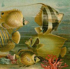 1894 fish ocean scene original antique sea by antiqueprintstore