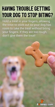 Always say 'easy' and give your dog an opportunity to take the treat nicely. Hold a treat in the palm of your hand if your dog has a hard time with this concept. Show your dog the treat and say 'good easy' if the treat is taken nicely.