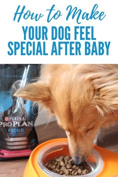 #ad How to make your dog feel special after baby arrives! How we make our dog feel included in the family now that we're a family of four (humans)! How to make your dog happy! Plus win a trip to the 2018 Westminster Dog Show! #thedogumentaries #collectivebias #proplan @collectivebias @proplan