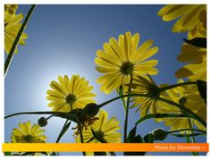 How to Take Great Macro Photos with the Fuji HS10