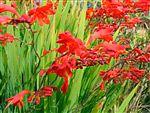 Far Reaches Farm A Rare Plant Specialty Nursery in Port Townsend Washington