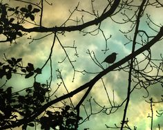 Heart of a Shadow - Bird photograph, silhouette, bird on branch, Nature photograph 8x10. $24.00, via Etsy.