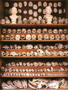 wall of skull + bones. get in my house!