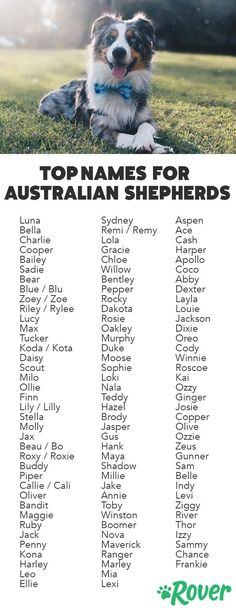 The Top Names for Aussies and Australian Shepherd Puppies Dogs dog names Australian Shepherds, Australian Shepherd Puppies, Aussie Puppies, Dogs And Puppies, Puppies Puppies, Rottweiler Puppies, Blue Merle Australian Shepherd, Aussie Shepherd Puppy, Doggies